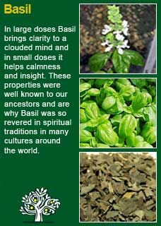 Richard Whelan ~ Medical Herbalist ~ Basil