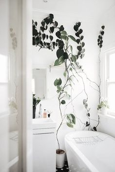 wild plants in a clean white bathroom