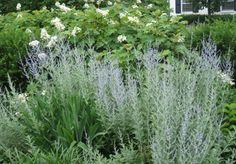 Cómo crear un jardín de plantas aromáticas - http://www.jardineriaon.com/crear-jardin-de-plantas-aromaticas.html #plantas