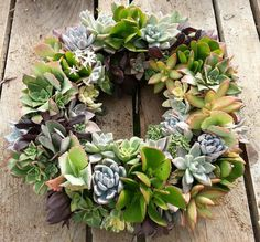 Living Succulent Wreath 10 Diameter ready to go by SANPEDROCACTUS