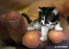 The smallest kitten in the world. its body only 7 cm long, 500grams.... :0 <3