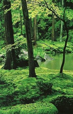 Moss Temple in Kyoto, Japan  National Geographic | November 1989