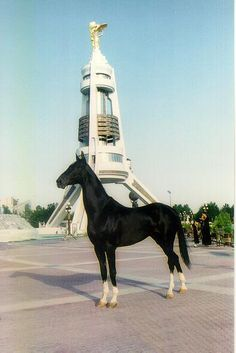 my..Very..Favorite Akhal-Teke of All time. seen him years ago so had to find the pic again. the slightest of all builds the Akhal-Teke boasts. little to no main and small boned they seem to float. rare and beautiful they are desert horses.