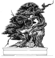 BOOK 100 BONSAI, SOME DRAWS AND PAGES!!!! BY NACHO MARIN.