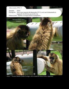 Libro de Bienestar Animal en Cautiverio y Enriquecimiento Ambiental. Descarga gratis en: https://www.scribd.com/collections/5757077/Animal-enrichement-and-welfare https://www.academia.edu/8755049/Enriquecimiento_Ambiental_y_Bienestar_de_Mam%C3%ADferos_en_Cautiverio