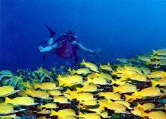 File:Banana Reef.jpg