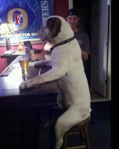 Funny Alcohol | Funny dog drinking at a bar - Funny Pictures, Funny jokes and so much ...
