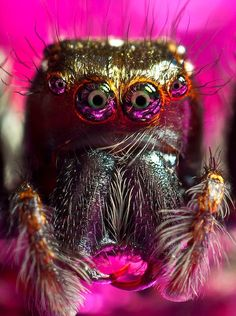 close-up of a spider, wow cute! ok, not if they bit you! :)