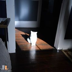 Good Morning!  I caught Eggs spirit in this photo. He shines bright.  #exoticshorthair #cat #cute #flatface #kitten #meow #pet #mreggs #catlover #exoticsofinstagram #smushface #weeklyfluff