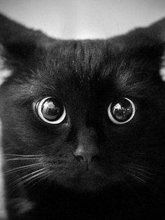 Los ojos del gato negro