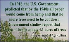In 1916, the U.S. Government predicted that by the 1940s all paper would come from hemp and that no more trees need to be cut down. Government studies report that 1 acre of hemp equals 4.1 acres of trees. Plans were in the works to implement such programs....    then the idiots stepped in and stopped these plans!!!!!