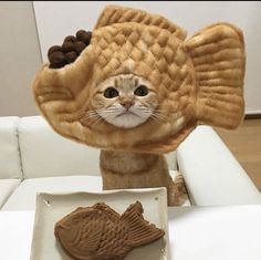 You are what you eat... - funny post - Imgur Cute Baby Cats, Cute Little Animals, Cute Cats And Kittens, I Love Cats, Cool Cats, Kittens Cutest, Funny Cats, Funny Animals, Cat Dressed Up