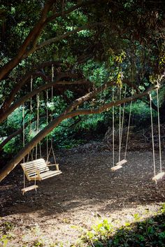 The Treehouse: Family Swing Project Hmmm I wonder if any of our trees can handle this!!!