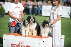 cancorso 2012, cane, cani, concorso, concorsi, il messaggero, quotidiano, animali, contest, evento finale