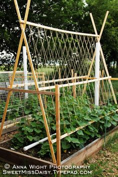 Cucumber Trellis - wow wish I would have seen this last year!!! We had crazy cucumbers.  =)