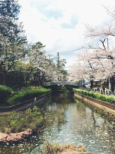 Cherry Blossom lined waterway in Takayama, Japan. Cherry Blossom Japan, Cherry Blossoms, Takayama Japan, Japon Tokyo, I Want To Travel, Luxury Travel, Travelling, Travel Destinations, Places To Go