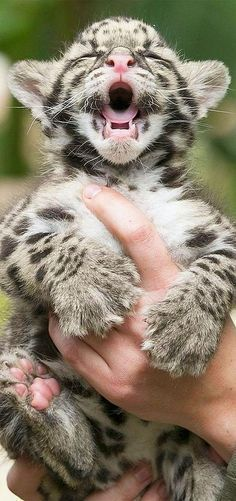Cute little cub!  But I wish it could be free in nature, as it should be.