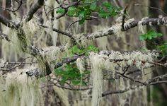 Parque Patagonia | Vida Silvestre