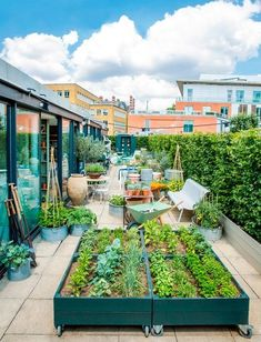 A rooftop garden in London, with rolling planter boxes for growing foodstuffs.