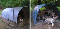 Goat Sheds Hoops