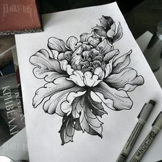 Сhrysanthemum sketch