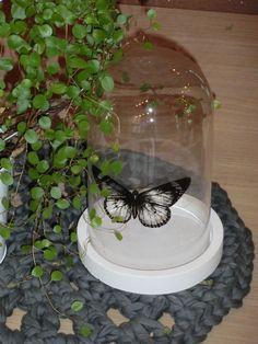Glasglocke+mit+Schmetterling+19+cm+hoch,+Beton+<3+von+Little+Things+auf+DaWanda.com