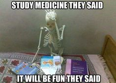 funny skeleton studying books 22 Funny Skeletons  You Never Seen
