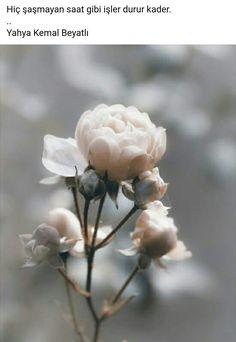 Photo Rose at backlight by Uta Naumann on flowers Flower Wallpaper, Wallpaper Backgrounds, Iphone Wallpaper, Wallpaper Ideas, Beautiful Roses, Beautiful Flowers, Flower Aesthetic, Pink Aesthetic, Aesthetic Drawing