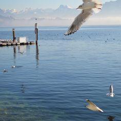 Möve Slow Living, Bird, Animals, Inspiration, Biblical Inspiration, Animales, Animaux, Birds, Animal