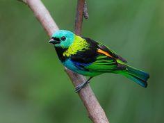 #birds #pajaros