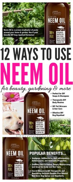 """Neem Oil Benefits For Skin, Hair, Health, Gardening, Insects Neem Oilhas been used for thousands of years in cosmetic and medical applications. The oil is pressed from the seeds, leaves, stems and bark of the evergreen Neem tree which grows in India — and it is known as """"the village pharmacy."""" In fact, the term […]"""