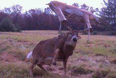 Deer Hunting!  (What an easy target!)