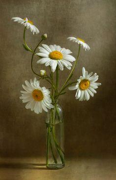 Daisies still life | Flickr - Photo Sharing!