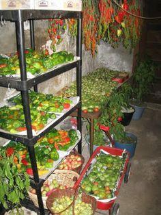 storing pepper