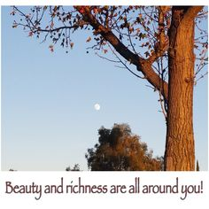 Indeed! Beauty and richness is all around. Beauty is not expensive. It's priceless.      #prettylook #designer #couture #luxury #apparel #inspiration #beauty #nature #goodness #love #happiness #pattern #moon #color #design #tree #photography #richness #priceless