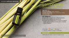 Here you can learn about doTERRA lemongrass essential oil uses. I explain all about lemongrass and all the ways you can use it and how to use it. Lemongrass Essential Oil Uses, Doterra Lemongrass, Lemongrass Oil, Best Essential Oils, Doterra Wellness Advocate, Citrus Oil, Doterra Essential Oils, Lemon Grass, Pure Products