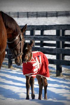 Graded Stakes winner Juanita, is proud of her new Medaglia d'Oro colt.