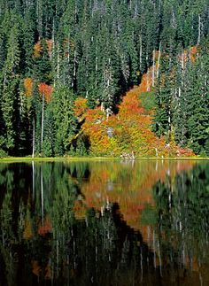 Fall color on Lake Elizabeth in the Money Creek area. This lake is just off the side of Money Creek Road, a gravel road that leads up to a region filled with old mines. Money Creek is off of Highway 2 a few miles East of Index, WA.