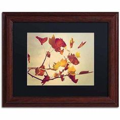 Trademark Fine Art Still Fall Canvas Art by Philippe Sainte-Laudy, Black Matte, Wood Frame, Size: 16 x 20