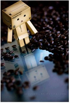 Danbo contemplates coffeee beans