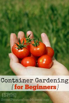 Vegetable Gardening For Beginners How to Container Garden – A Vegetable Container Gardening Guide for Beginners - Learning how to container garden vegetables is super easy! In just a few simple steps, you could start growing veggies today! Diy Garden, Garden Projects, Garden Plants, Garden Landscaping, Garden Guide, Garden Ideas, Fruit Garden, Outdoor Plants, Herb Garden
