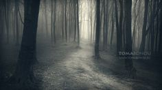 Forest of my dreams  www.tomabonciu.ro