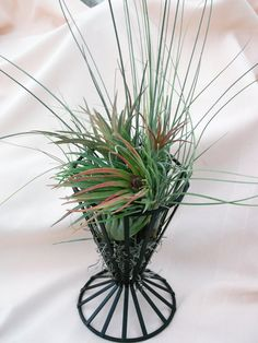 Wire French Fry Basket airplant arrangement by ThePerfectPlant