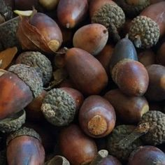 How to Make Dye from Acorns. Learn how to make a Natural Dye made from Acorns for Cotton Fabric Shibori Fabric, Fabric Yarn, How To Dye Fabric, Cotton Fabric, Dyeing Fabric, Wool Yarn, Fabric Crafts, Dyeing Yarn, Yarn Crafts