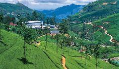 """Sri Lanka - """"Radosna łza Indii""""   Anormalny Świat!"""