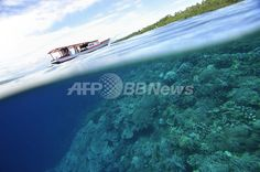 インドネシア・ブナケン島(Bunaken Island)のマナド(Manado)保護区のサンゴ礁とマングローブ(2006年5月14日撮影)。(c)AFP/ROMEO GACAD ▼12Jul2012AFP|世界のサンゴ礁が急減、8割消えた海も 国際シンポで警鐘 http://www.afpbb.com/articles/-/2889173
