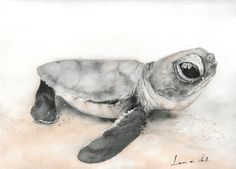 Items similar to Baby Turtle Watercolor DIGITAL Painting, Nautical Wall Art on Etsy Nautical Wall Art, Baby Seal, Baby Turtles, Watercolor, Digital, Artist, Artwork, Painting, Animals