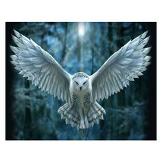 White Owl ❤ liked on Polyvore featuring home, home decor, white home decor, owl home accessories, owl home decor, white home accessories and white owl home decor