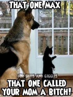 badddd kitty ... lol lol