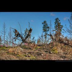 Skogsbranden Västmanland 2014